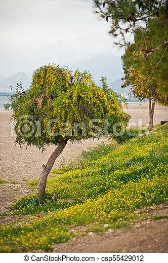 A small tree on the sea beach 8247. - csp55429012