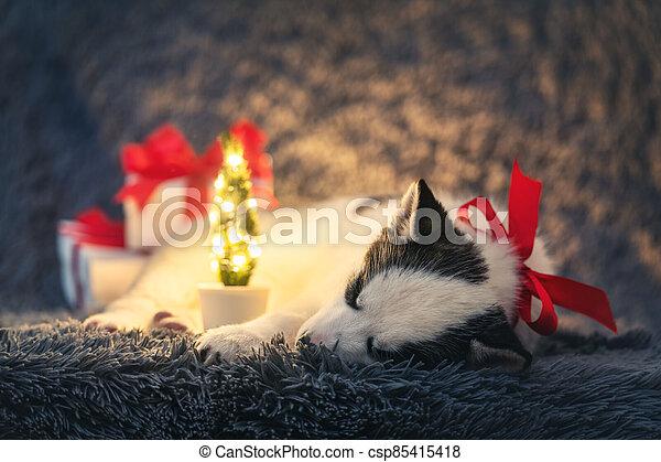 A small white dog puppy breed siberian husky - csp85415418