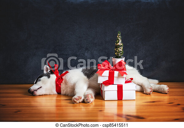 A small white dog puppy breed siberian husky - csp85415511