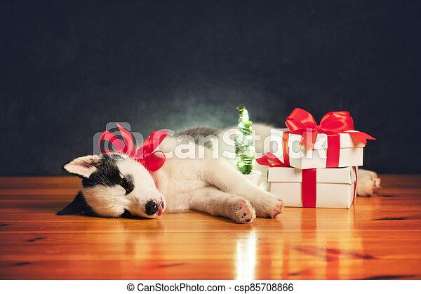 A small white dog puppy breed siberian husky - csp85708866