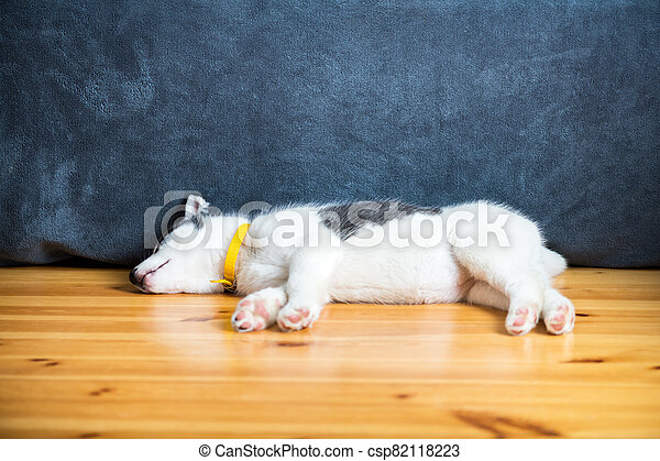 A small white dog puppy breed siberian husky - csp82118223
