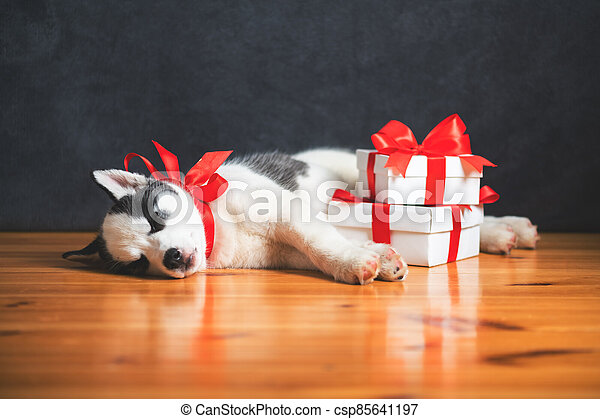A small white dog puppy breed siberian husky - csp85641197