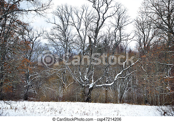 A snowy forked tree in the field aside. - csp47214206