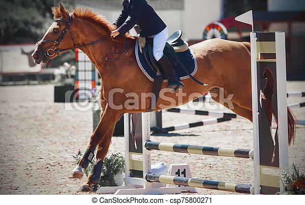 A sorrel pretty pony with a rider in the saddle jumps over a low barrier - csp75800271
