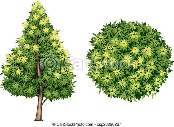 A Southern magnolia plant - csp23296267