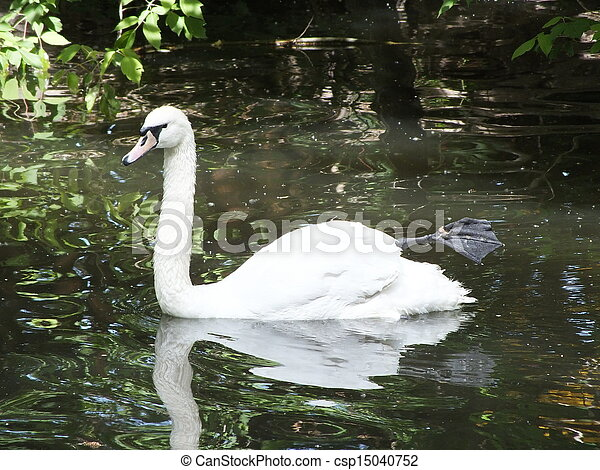 A swan with a stretched leg - csp15040752