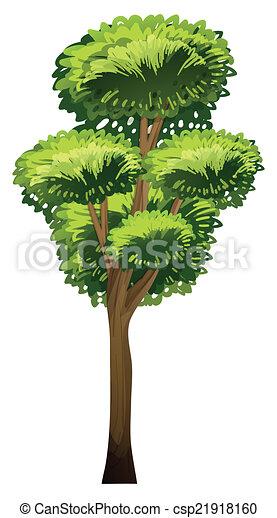 A tall tree - csp21918160
