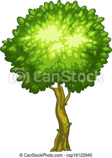A tall tree - csp16122940