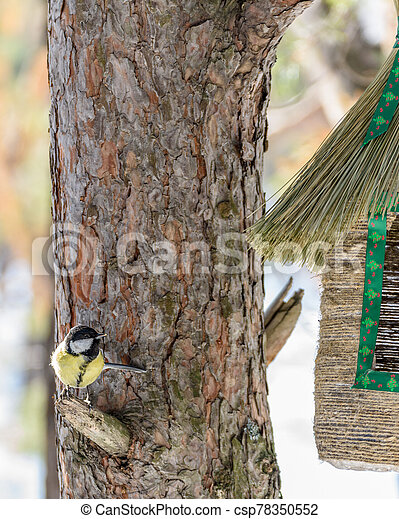 a tit sits on a tree near the feeder - csp78350552