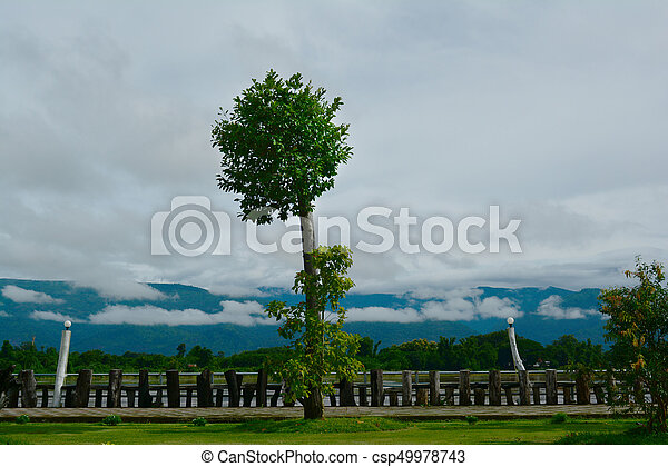 a tree at Khong river side  with clouds  in rainny season - csp49978743