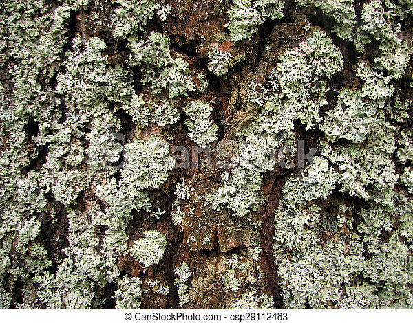 a tree bark texture with moss - csp29112483