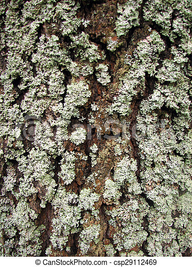 a tree bark texture with moss - csp29112469
