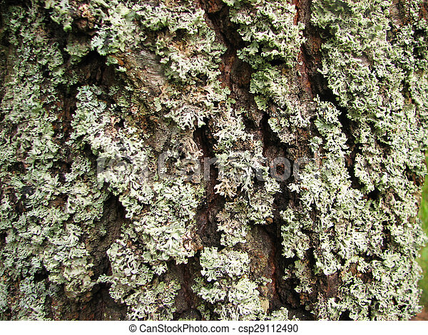 a tree bark texture with moss - csp29112490