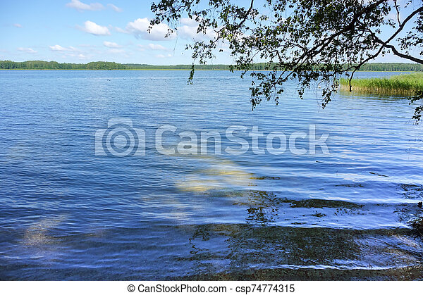 a tree branch over the pond, the surface of the lake - csp74774315