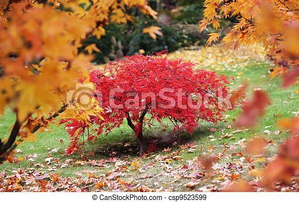 A tree in a autumn japanese garden - csp9523599