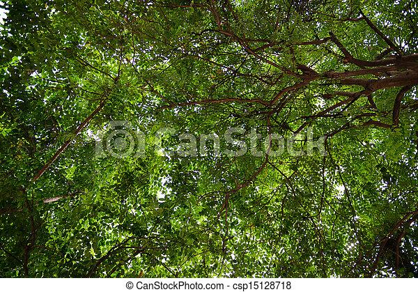 A Tree of life - csp15128718