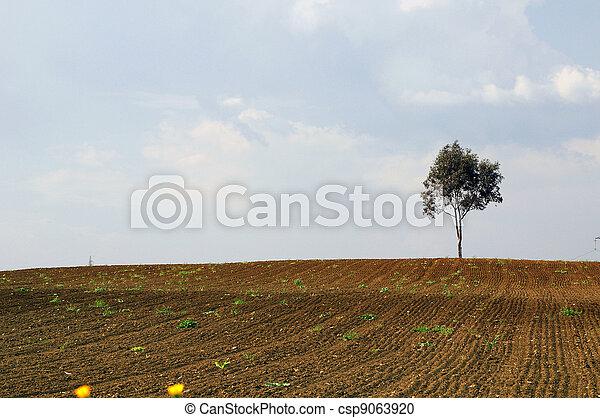 a tree - csp9063920