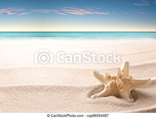 A tropical starfish laying in the beach sand - csp66054487