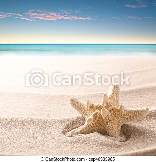 A tropical starfish laying in the beach sand - csp46333965