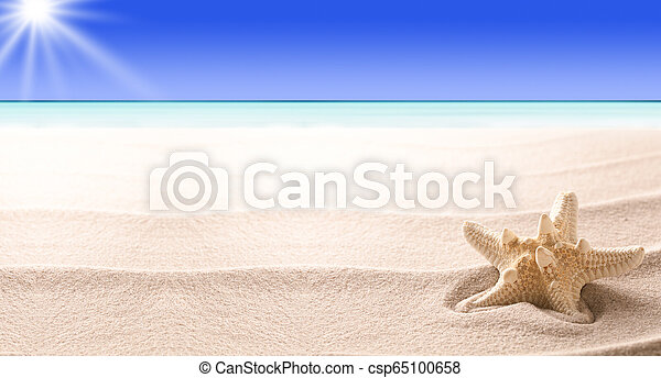 A tropical starfish laying in the beach sand - csp65100658
