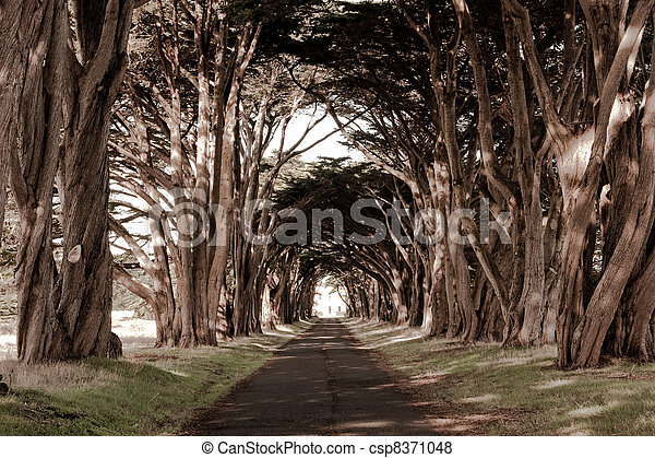 A tunnel like row af trees - csp8371048
