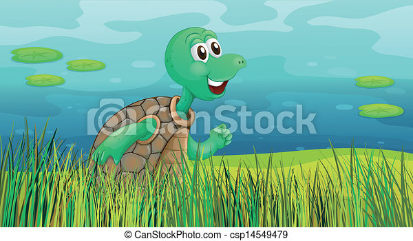 A turtle running along the pond - csp14549479