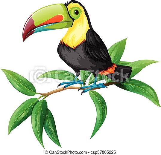 A Vector of Toucan on White Background - csp57805225