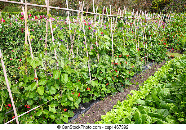 A vegetable garden. - csp1467392