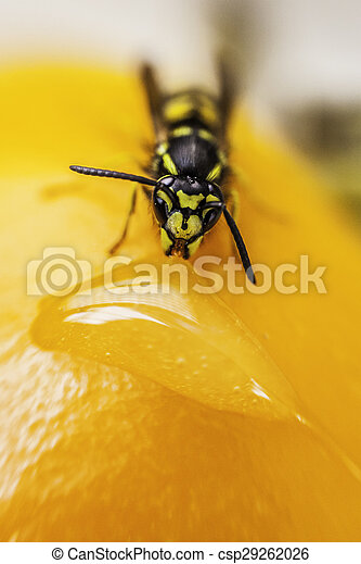 a wasp while eating - csp29262026