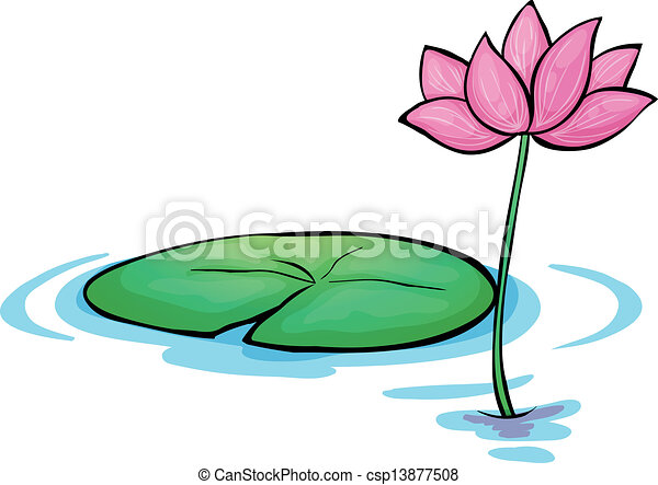 a waterlily flower illustration of a waterlily flower on a white rh canstockphoto com