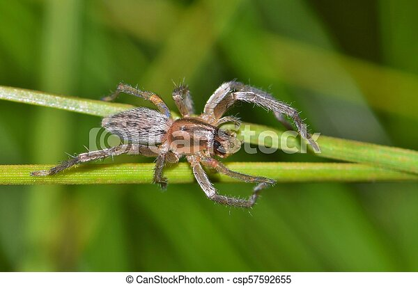 A Yellow Sac Spider With Prey