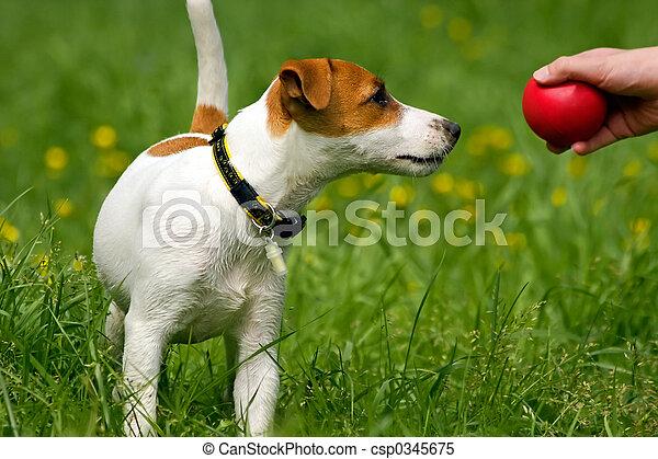 aanhalen, terrier, hefboom russell - csp0345675