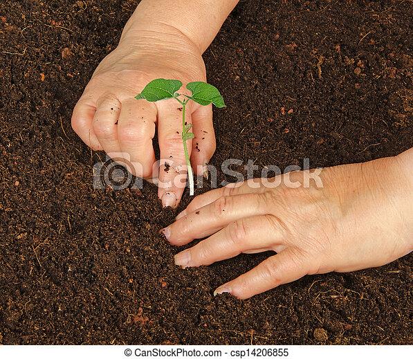 aanplant, boon, plant - csp14206855