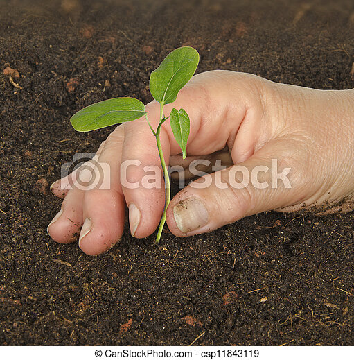 aanplant, sapling - csp11843119