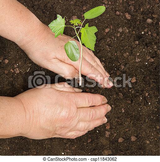 aanplant, sapling - csp11843062