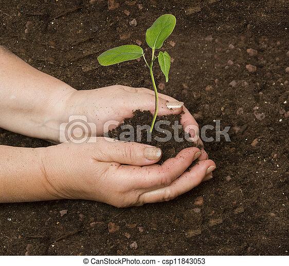 aanplant, sapling - csp11843053