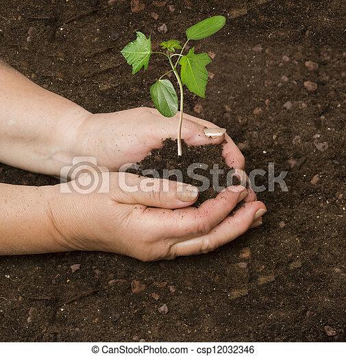 aanplant, sapling - csp12032346