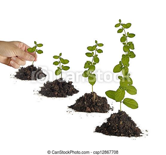 aanplant, sapling - csp12867708