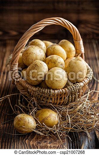 aardappel - csp21007268