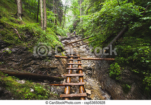 Abandoned old wooden bridge in jungle forest. - csp53650928