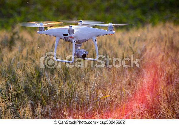 Drohne fliegen über Weizenfeld und Mapping - csp58245682