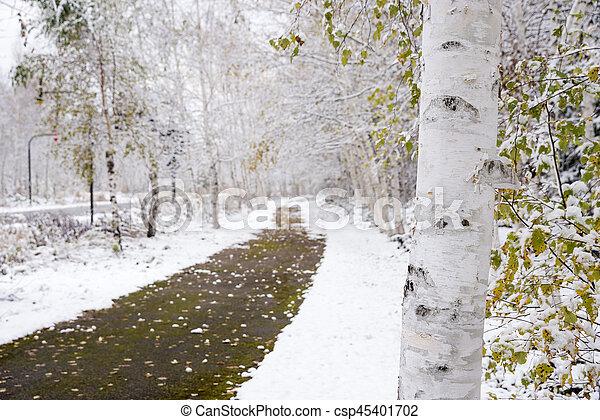 Abedul blanco tronco de rbol acera tronco rbol abed l fotograf a de archivo buscar - Abedul blanco ...