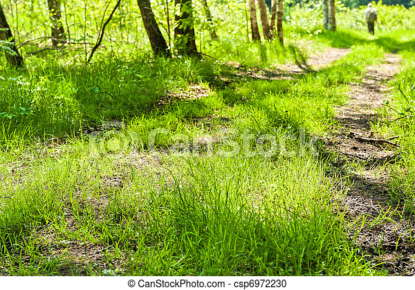 Birches - csp6972230