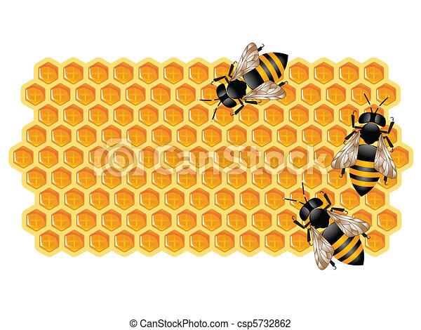 abeilles, fonctionnement, rayon miel - csp5732862