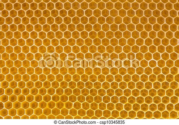miel de abeja en panal - csp10345835