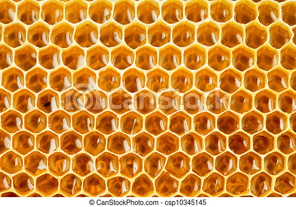 La miel de abeja en el primer plano del panal - csp10345145