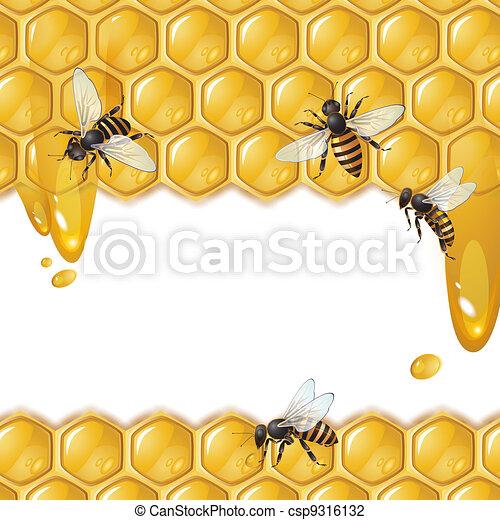 Bees y panal - csp9316132