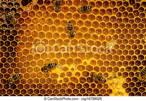 Las abejas trabajan en panal - csp16798529