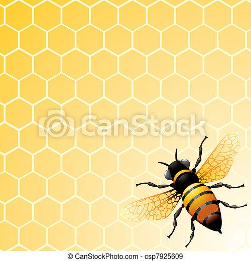 abelha, favo mel - csp7925609