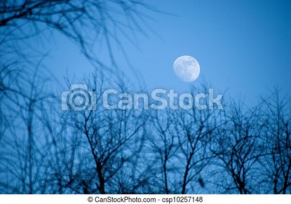 abend, himmelsgewölbe, mond - csp10257148